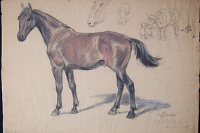 Untitled Horse Drawing